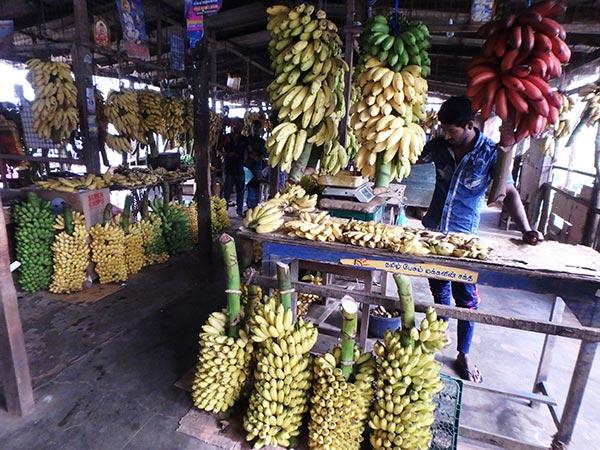 ジャフナの市場で、インドでも食べた感動的な美味しさのレッドバナナを発見!! 普通のバナナは1kg約80円〜200円ですが、レッドバナナは約280円。味は濃厚で甘く舌触りはなめらか、バナナ好きにはたまりません