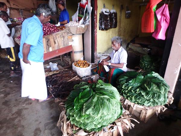 噛みタバコに使われるコショウ科の葉、キンマを売っている男性。スリランカでは噛みタバコを噛んで、口の中が真っ赤になっている人をたまに見かけます