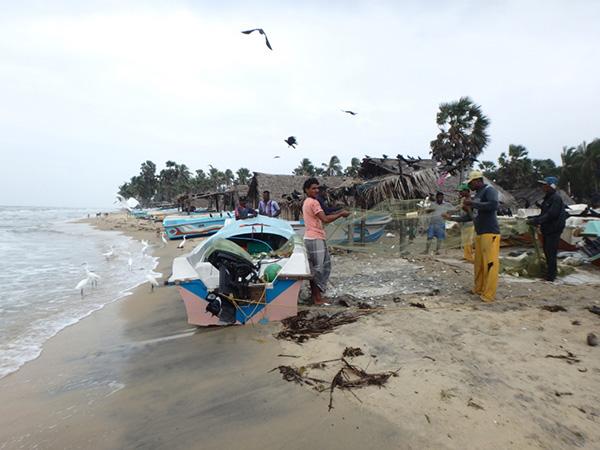 マンナール島の北西端にある漁村タライマンナールの浜辺で、雨のなか網から魚を外している漁師たち