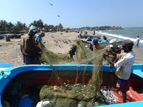 砂浜でせっせと網から魚を外している漁師さんたち。おこぼれを狙っている鳥もいっぱい。大物はもっと早い時間に水揚げされているようです