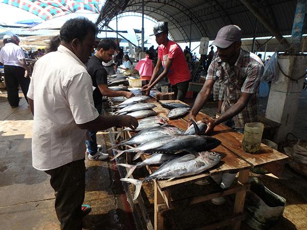 ズラリと並べられている魚を見ながら「美味しそ〜」を連発。他にもエビやイカ、見たことのない魚もたくさんいて見応えがありましたよ