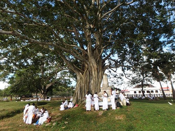 遺跡地区にはパワーを感じる大きな木が多く、一体いつからこの場所に生えているのだろうと話しながら2人で見上げていました