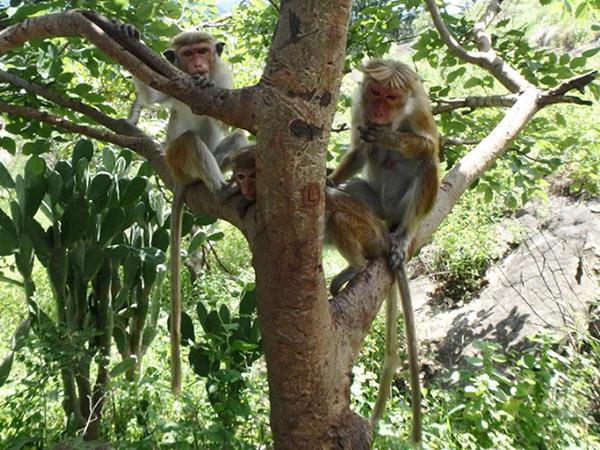 石窟寺院の周りには黒くて尖った耳をした猿がたくさんいて、観光客からマンゴーをもらって美味しそうに食べていました。髪型?が人っぽい (笑)
