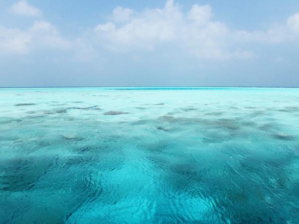 マアフシ島の周囲にはスノーケリングスポットが点在していて、カラフルで珍しい魚の群れやマンタにウミガメ、サメを間近で見ることができます♪