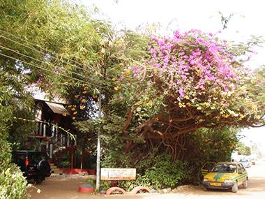 26.GAMBIA-Bakau