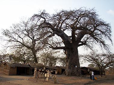 malawi15