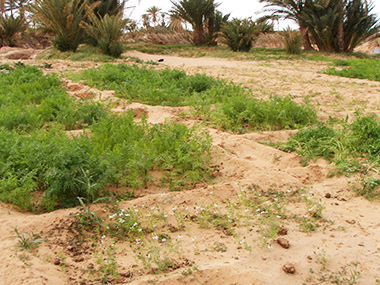mauritania40