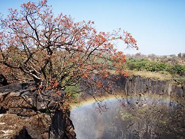 zambia19