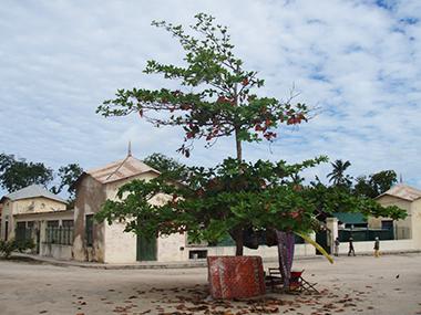 mozambique40