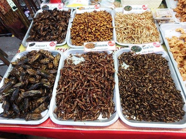 昆虫の素揚げも大人気!食べる勇気はないけど…