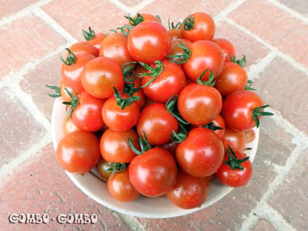 tomato2017a