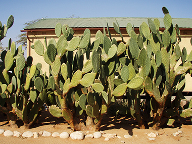 namibia40