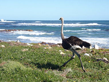 southafrica34