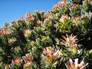 southafrica37