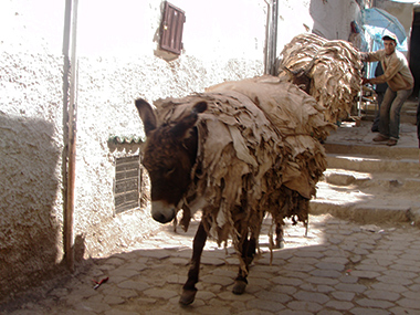 morocco2-162