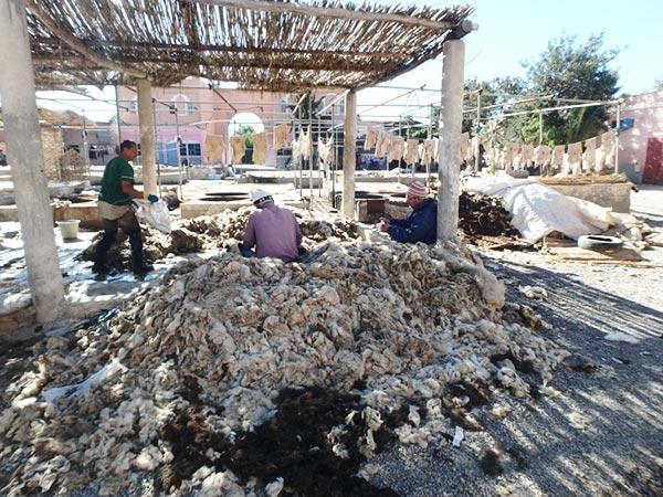 なめし革工のタンネリ Tanneursで、剥がされたヤギや羊の皮から毛を取り除いている職人さんたち