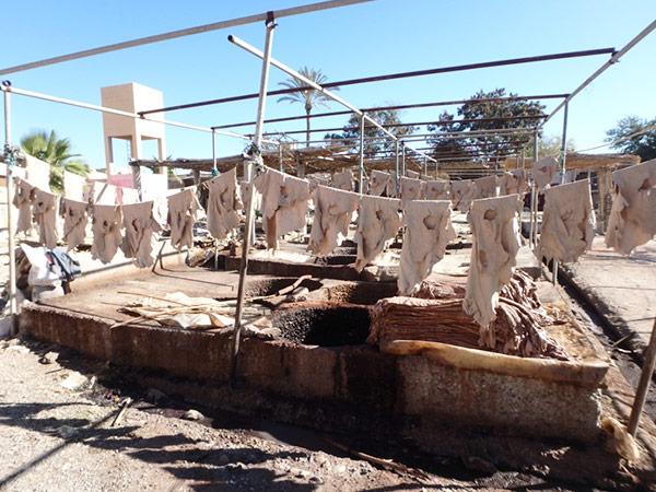 タンネリに干されている、なめされたヤギや羊の皮