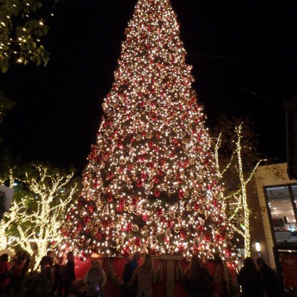 グローブはクリスマス一色♪こんな大きなツリーは初めて見ました!