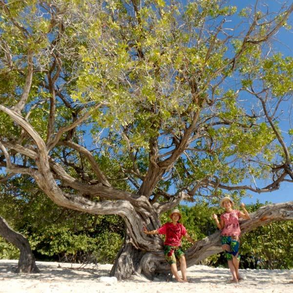 常夏のドミニカ共和国。ペデルナレスのビーチをお散歩♪
