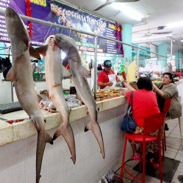サメとカラスミを売っているお店