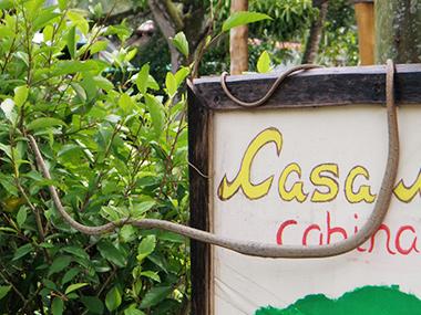 costa-rica44