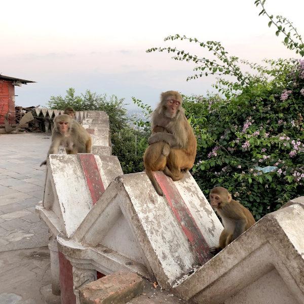 kathmandu6008